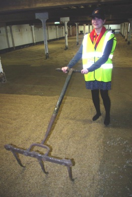 Rachel Goddard, a JIC PhD student, turning Chevallier malt on the maltings floor at Crisp's floor maltings in Norgolk
