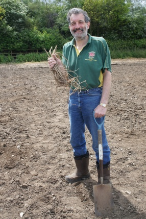 Jeff Sechiari of the Brewery History Society, one of the volunteers at the Hogs Back hop ground planting,  with a Farnham White Bine rootstock prior to planting