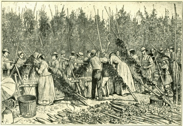 Hop pickers at ewotk in 1874. Note the little girl on the right …